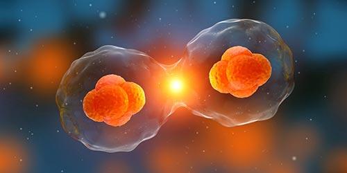 卵巢癌的危险因素有哪些?